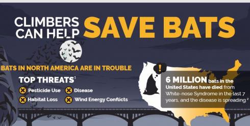 Climbers Can Help Save Bats